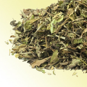Pai Mu tan Chinese white tea